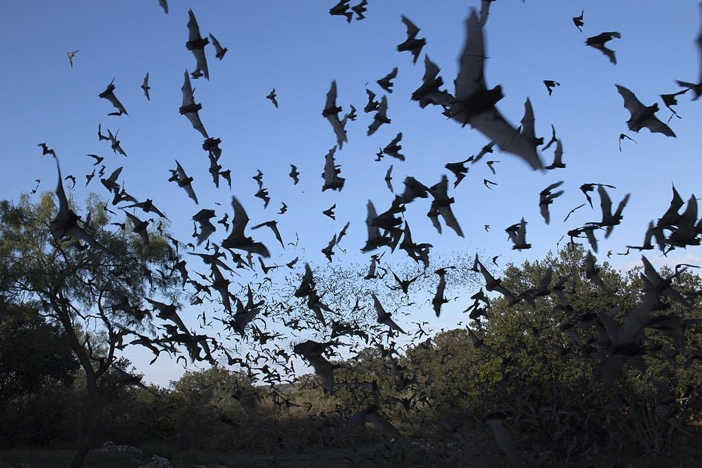 Bat – Dream Meaning and Symbolism 5