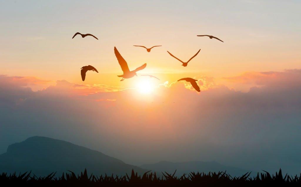 Pájaro - Significado Y Simbolismo De Los Sueños 3