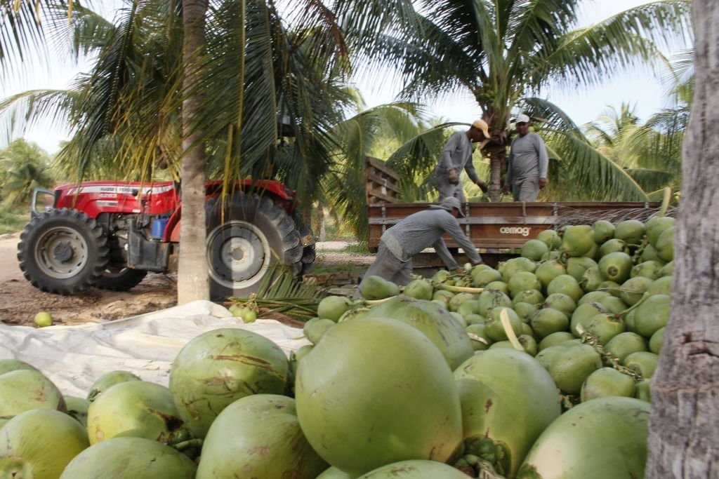 Coconut – Dream Meaning and Symbolism 6