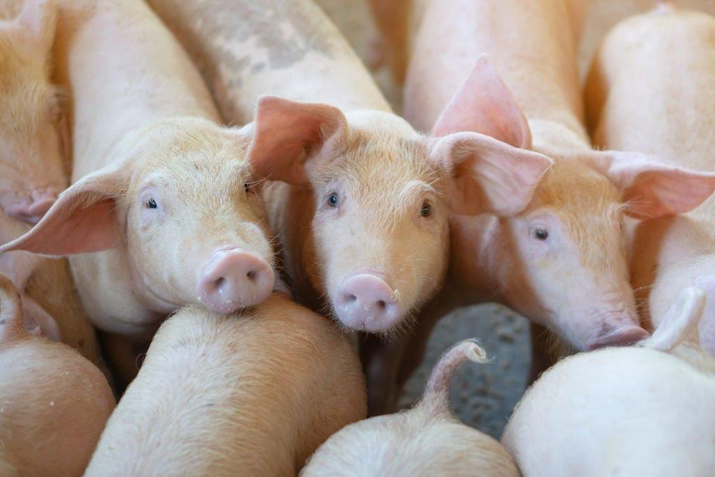 Pork – Dream Meaning and Symbolism 5
