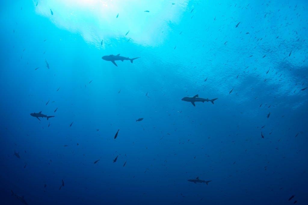 Tiburón - Significado Y Simbolismo De Los Sueños 4