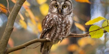 Owl – Dream Meaning and Symbolism 50