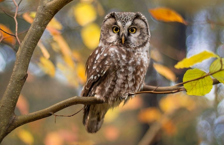 Owl – Dream Meaning and Symbolism 1