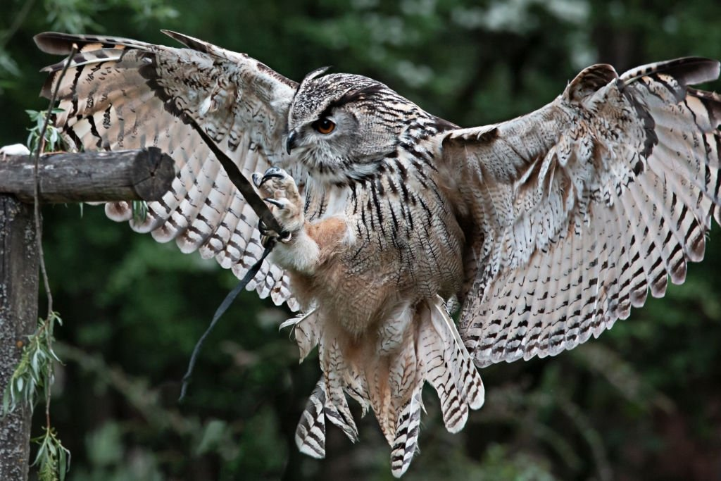 Owl – Dream Meaning and Symbolism 5