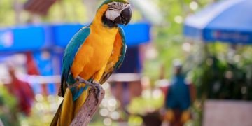 Parrot – Dream Meaning and Symbolism 84