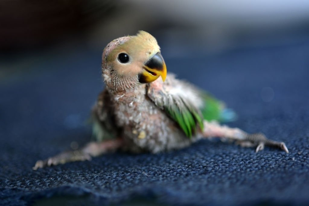Parrot – Dream Meaning and Symbolism 5