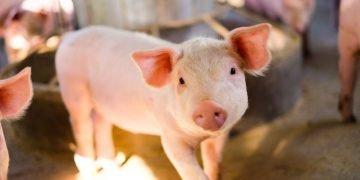 Pork – Dream Meaning and Symbolism 63