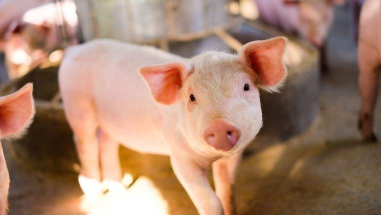 Pork – Dream Meaning and Symbolism 1