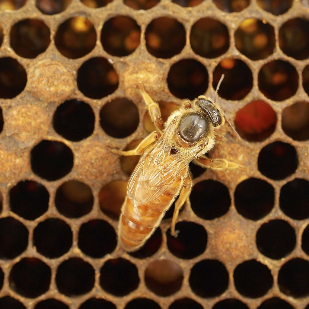 Bee – Dream Meaning and Symbolism 4