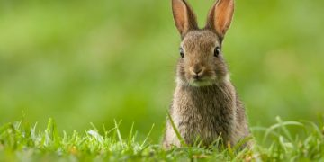 Rabbit – Dream Meaning and Symbolism 31