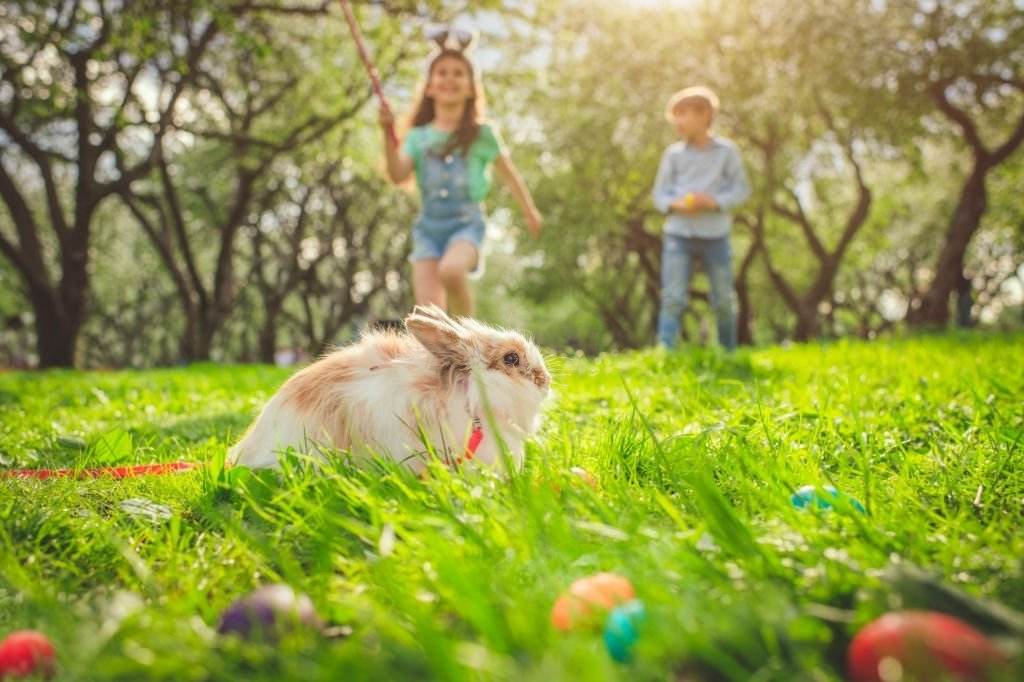 Conejo – Significado Y Simbolismo De Los Sueños 5