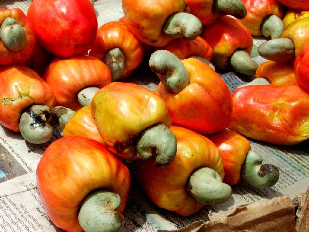 Red Cashew