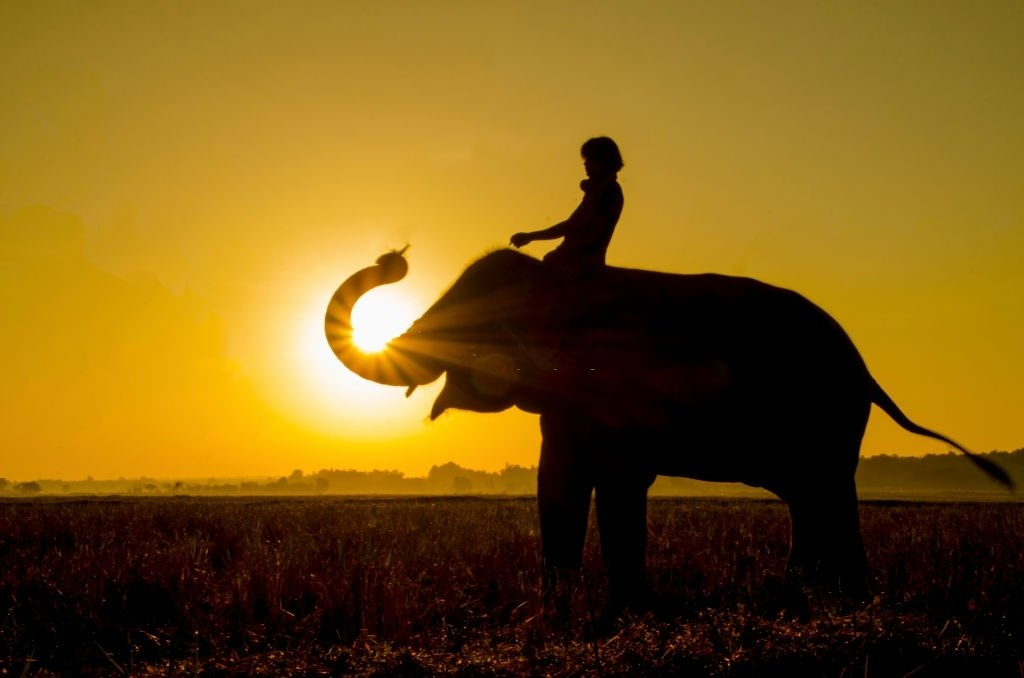 Elephant – Dream Meaning and Symbolism 5