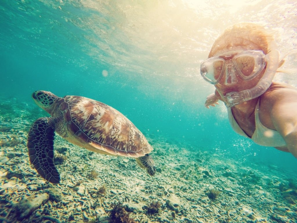 Turtle – Dream Meaning and Symbolism 3