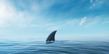 Shark – Dream Meaning and Symbolism 62