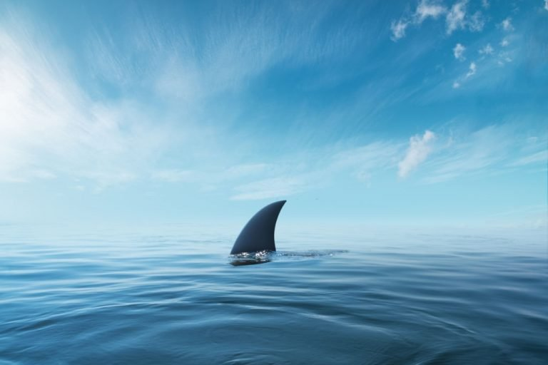 Shark – Dream Meaning and Symbolism 1