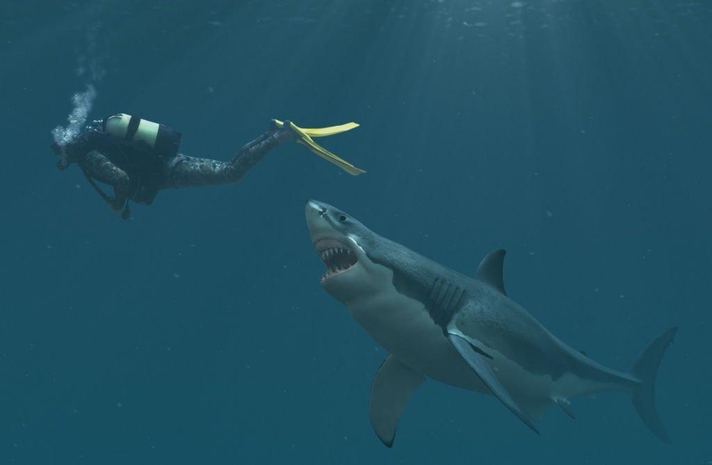 Tiburón - Significado Y Simbolismo De Los Sueños 3