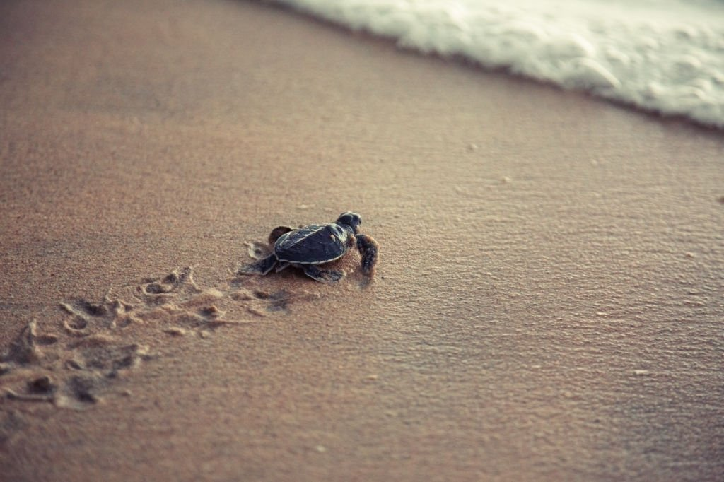 Turtle – Dream Meaning and Symbolism 5