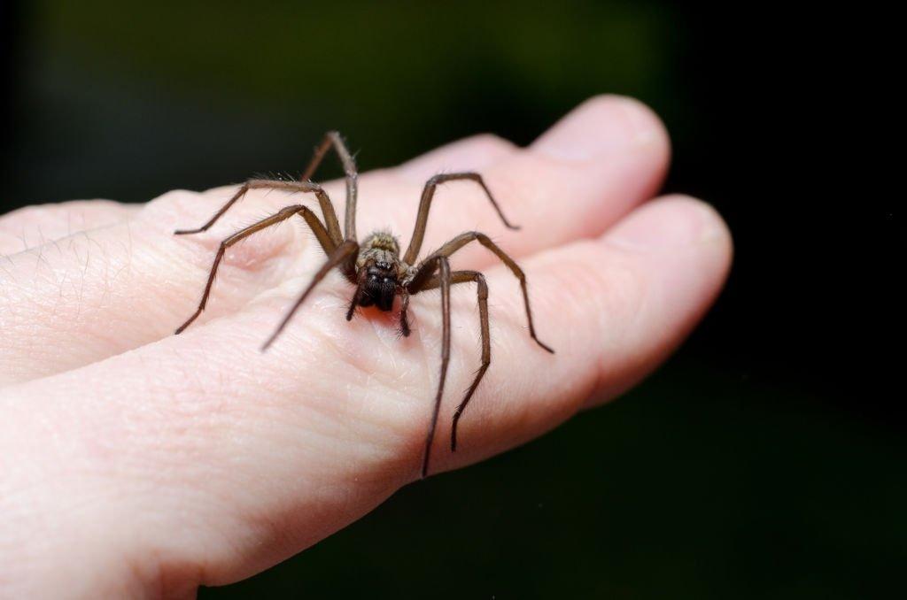 Takes A Spider Bite