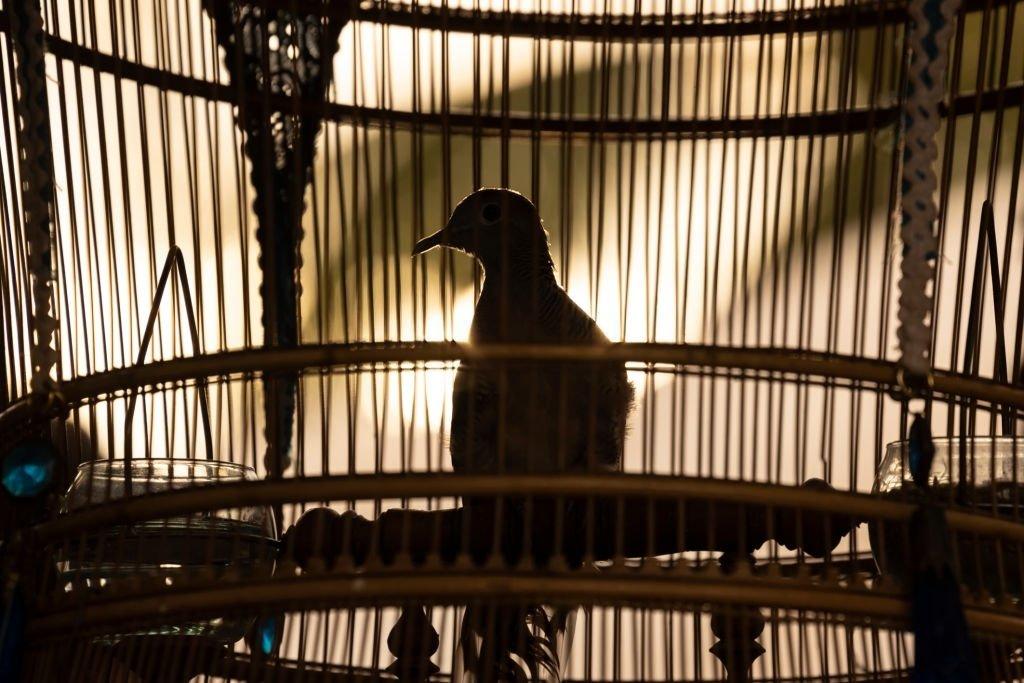 Pájaro - Significado Y Simbolismo De Los Sueños 4