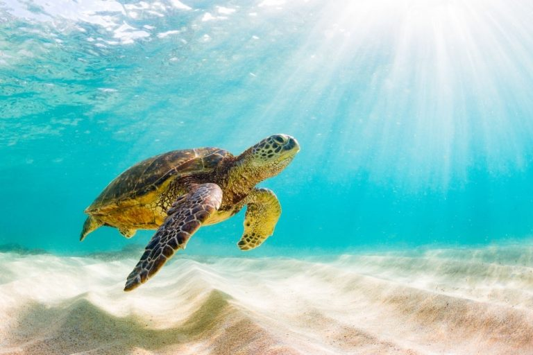 Turtle – Dream Meaning and Symbolism 1