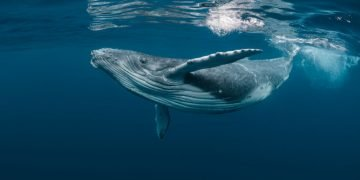 Whale – Dream Meaning and Symbolism 79
