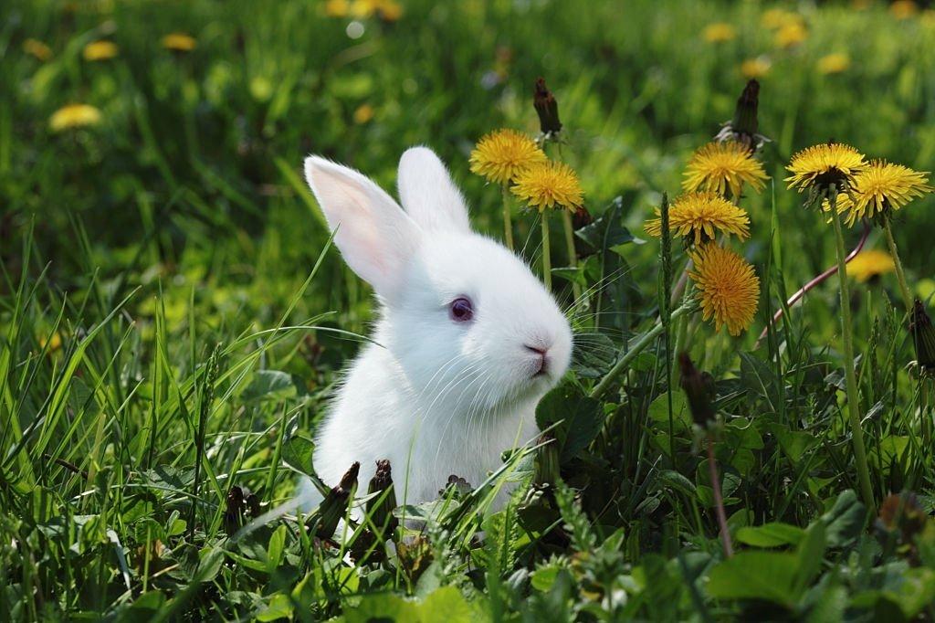 Conejo – Significado Y Simbolismo De Los Sueños 3