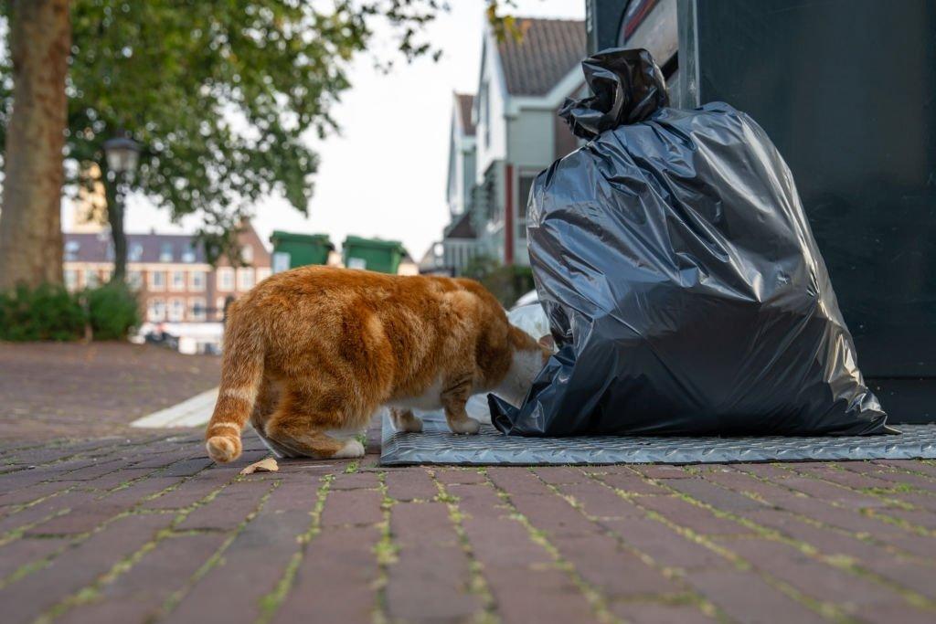 Cats Eat Trash