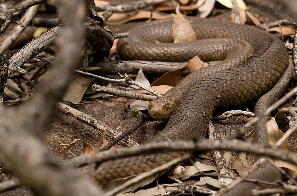 Serpiente marrón - Significado y simbolismo del sueño 3