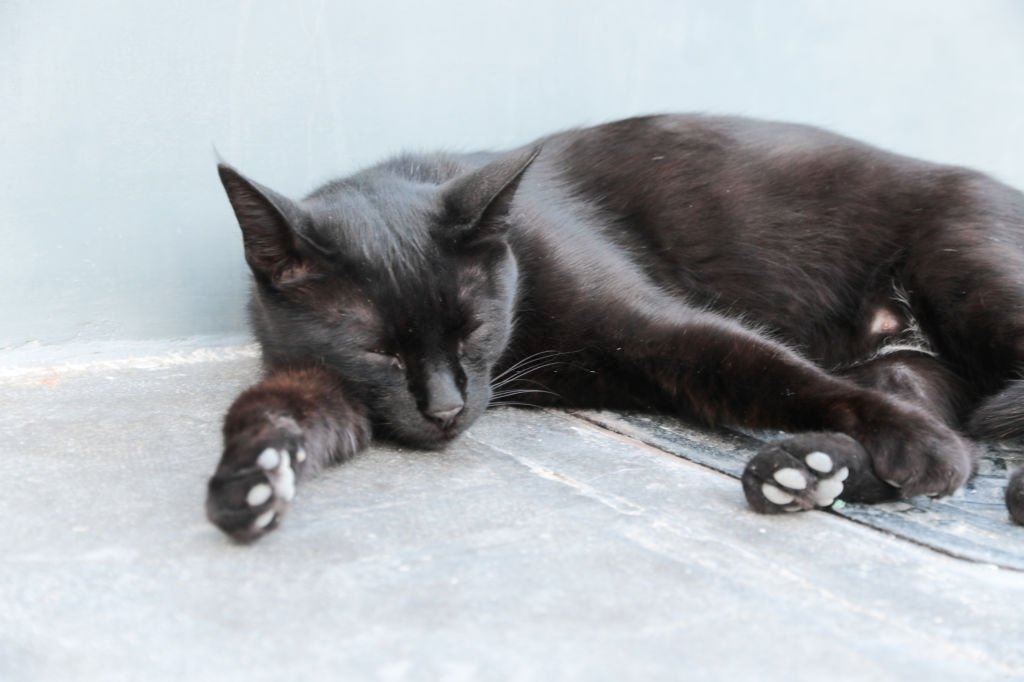 Black Cat – Dream Meaning and Symbolism 5