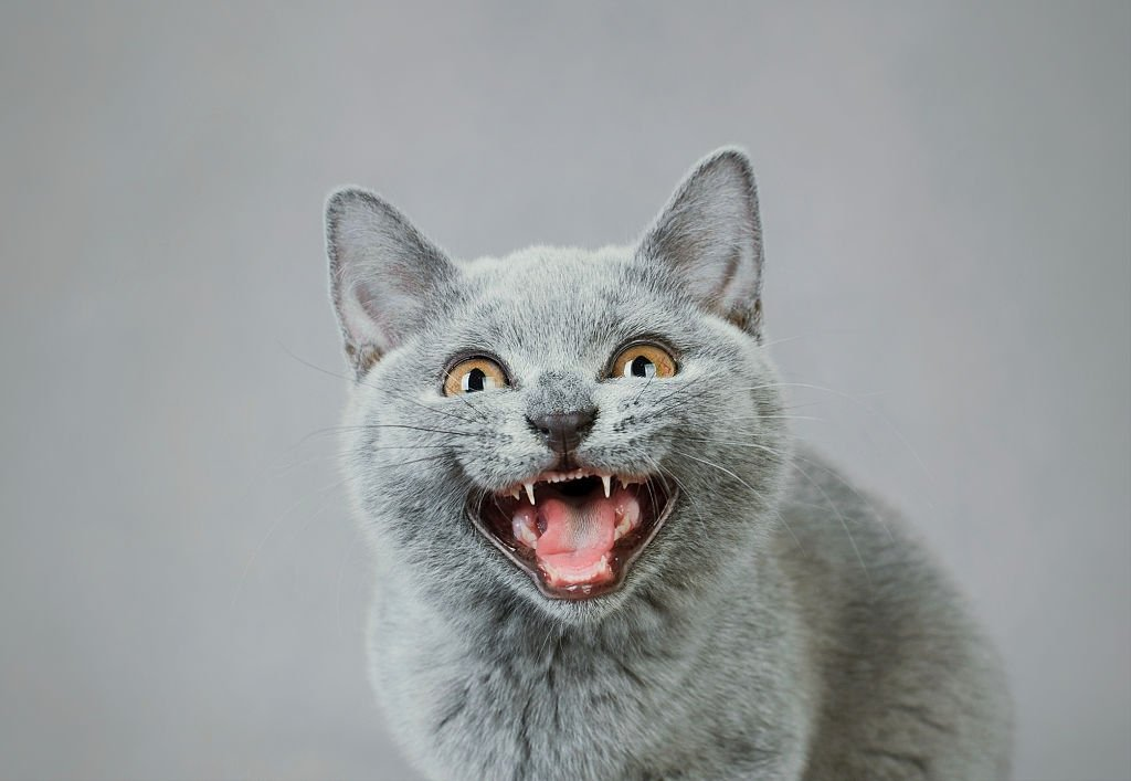 Gray Cat – Dream Meaning and Symbolism 5