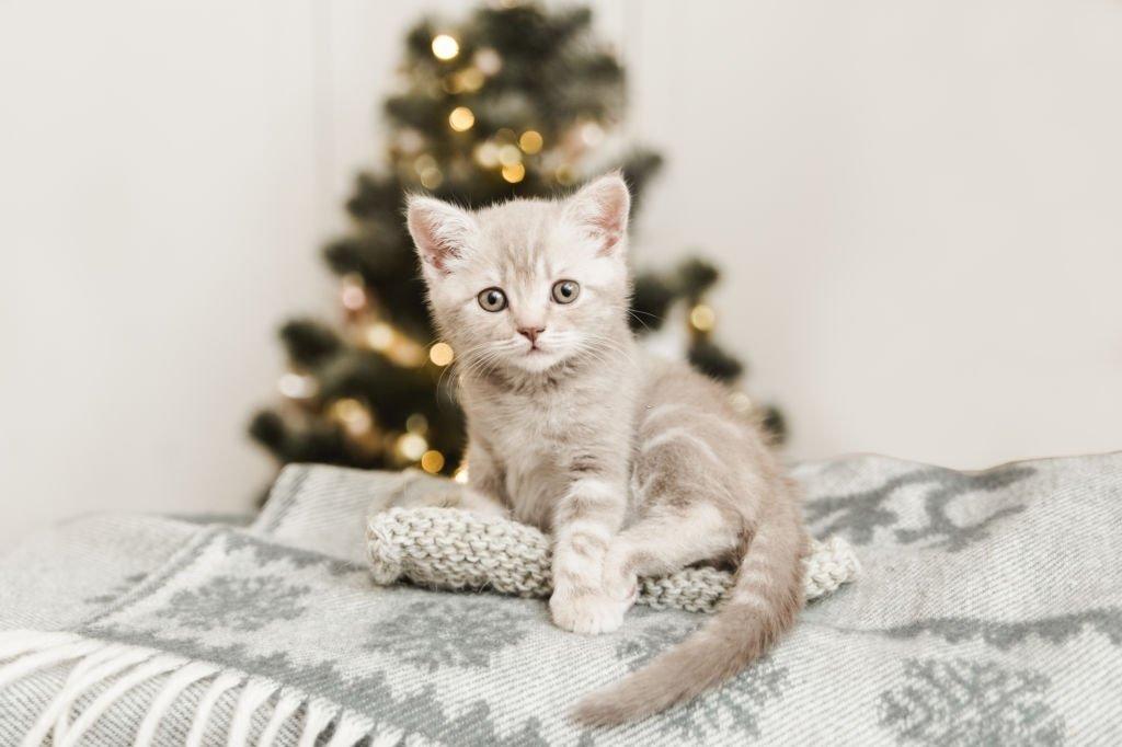 Gatito – Significado Y Simbolismo De Los Sueños 7