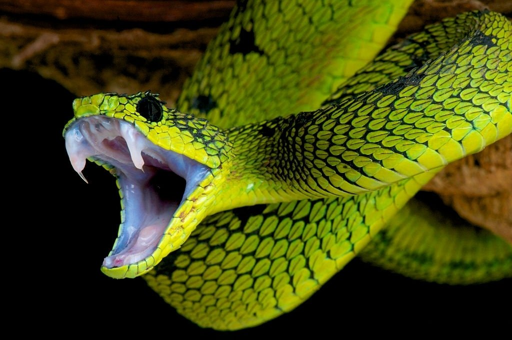 Green Snake – Dream Meaning and Symbolism 4