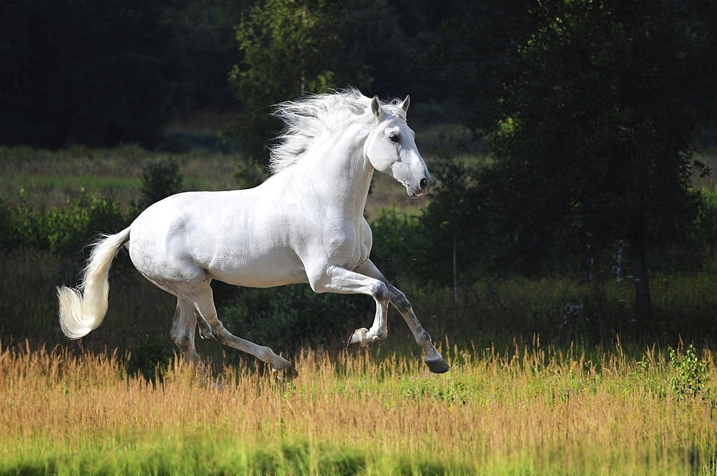 White Horse – Dream Meaning and Symbolism 5