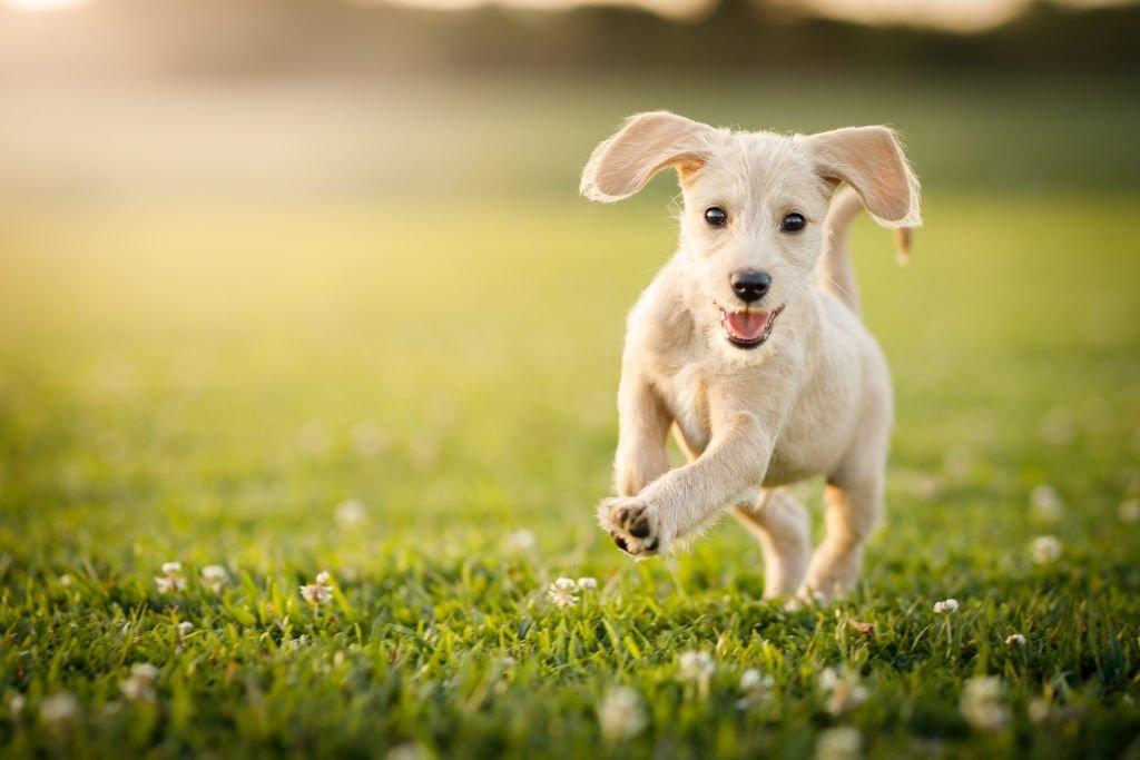 Perro Blanco – Significado Y Simbolismo De Los Sueños 5