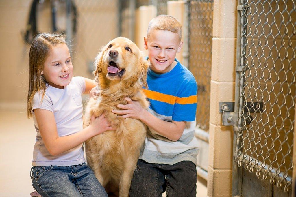 Adopting An Animal