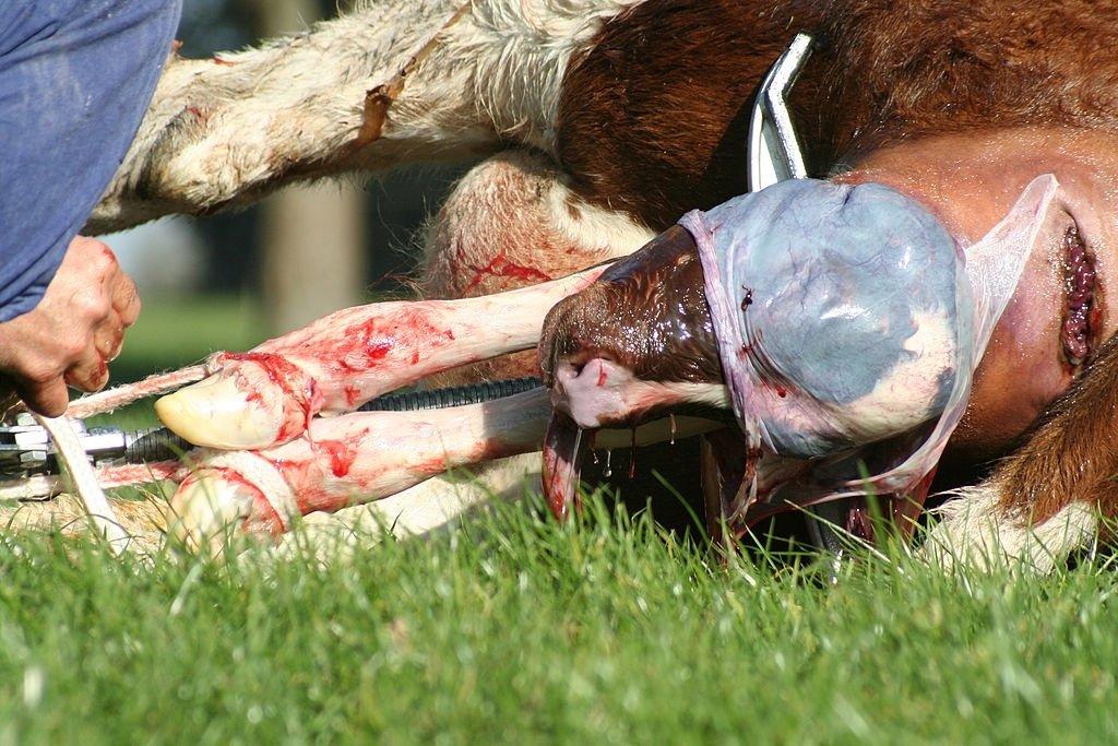 Animal Birth