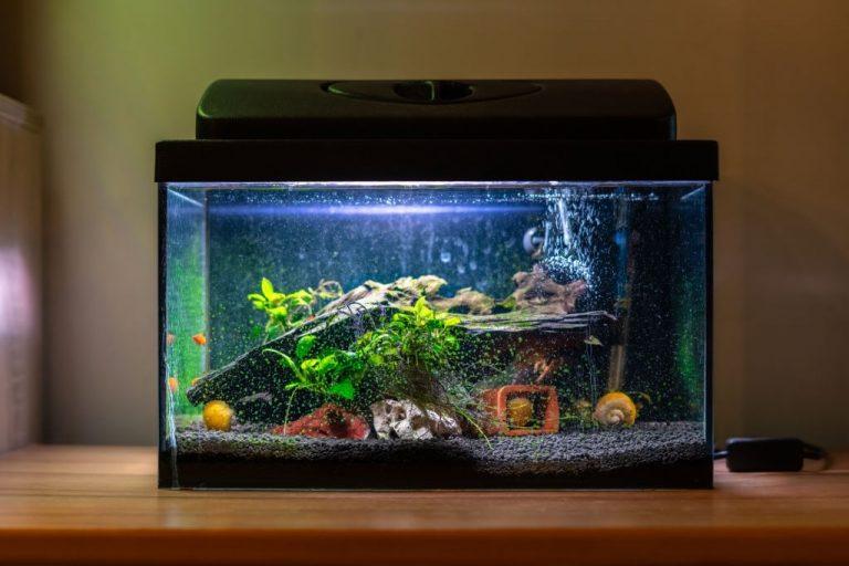 Aquarium – Dream Meaning and Symbolism 1