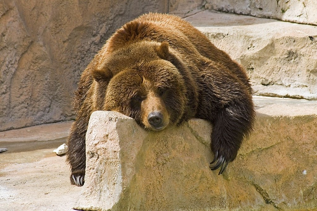 Bear – Dream Meaning and Symbolism 6