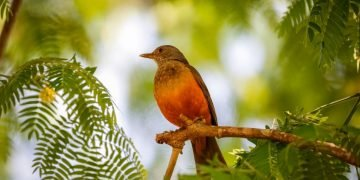 Bird – Dream Meaning and Symbolism 20