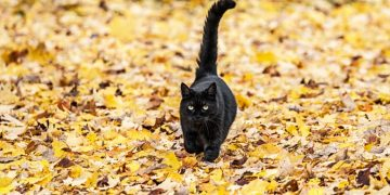 Black Cat – Dream Meaning and Symbolism 86