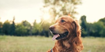 Brown Dog – Dream Meaning and Symbolism 39
