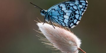Butterfly – Dream Meaning and Symbolism 6