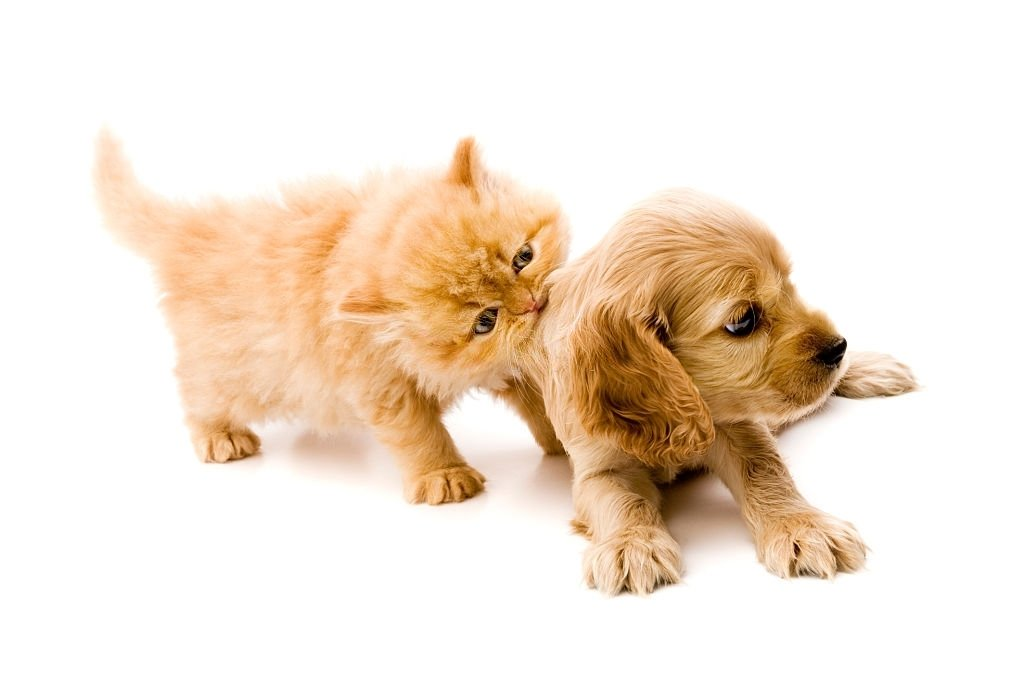 Cat Biting The Puppy