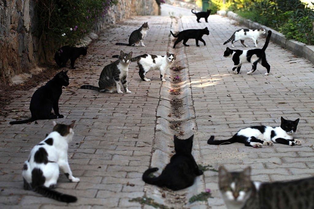 Cat In Large Quantities