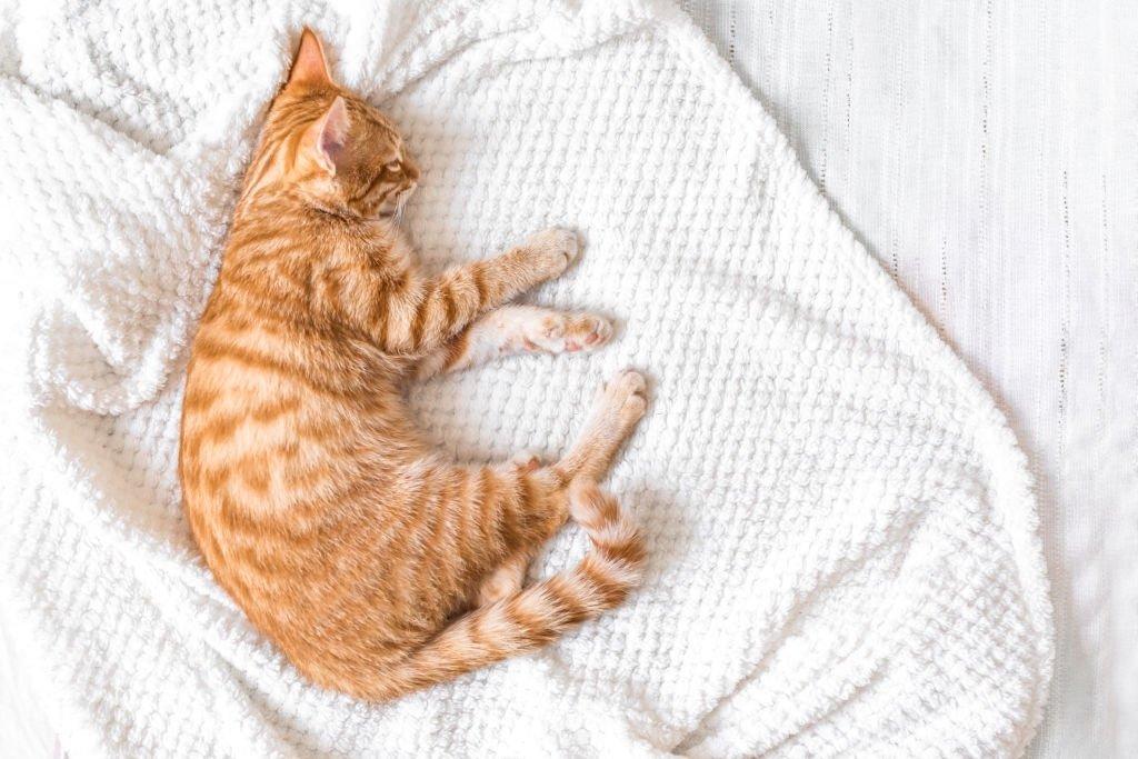 Dead Cat In Bed
