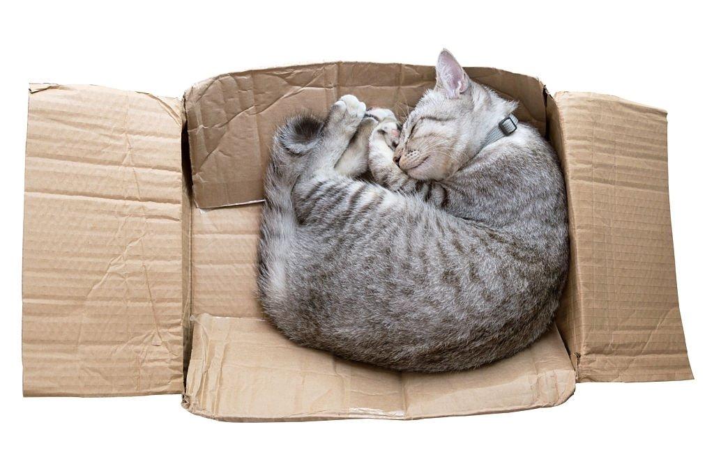 Dead Cat In The Box
