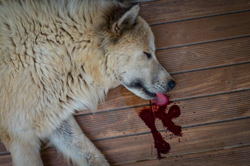 Dead Dog Full Of Blood