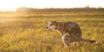 Dog Feces – Dream Meaning and Symbolism 25