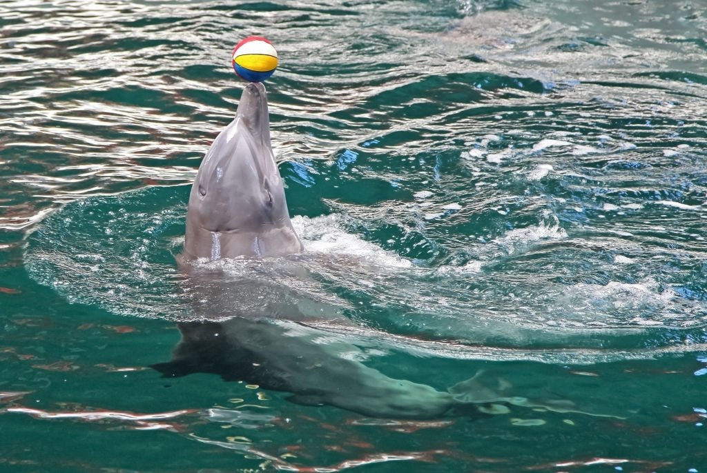 Dolphins Making Acrobatics